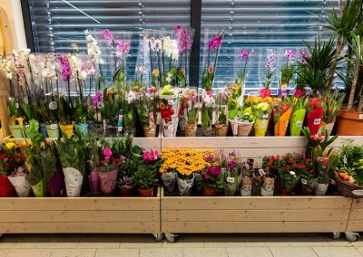 Edeka-Schermelleh-Bergkirchen-Blumen